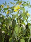 黄色庭院开花后面看法 免版税库存照片