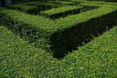 绿色庭院迷宫 库存照片