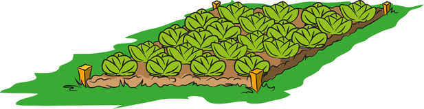 绿色庭院 库存照片