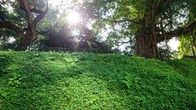 绿色庭院HK 库存照片