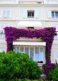紫色开花ï ¼视窗,绿色橙树 库存图片