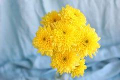黄色开花在一个花瓶的hrysanthemums在蓝色背景 免版税库存图片