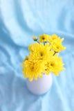 黄色开花在一个花瓶的hrysanthemums在蓝色背景 库存照片