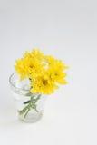 黄色开花在一块玻璃的菊花在白色背景 免版税库存图片