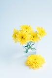 黄色开花在一块玻璃的菊花在白色背景 图库摄影