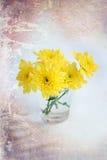黄色开花在一块玻璃的菊花在白色背景 免版税库存照片