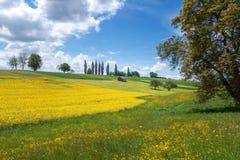 黄色开花的农村风景在春天 免版税库存图片
