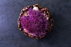 紫色开花的朝鲜蓟 免版税库存照片