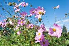 紫色开花的花 免版税库存图片