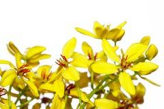 黄色开花背景 库存图片