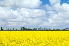 黄色强奸领域 免版税库存照片