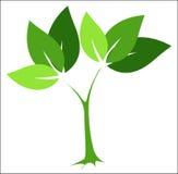 绿色徽标结构树 免版税库存照片