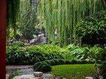 色情热带夏天叶子在东方被设计的庭院里 免版税库存照片