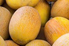 黄色成熟瓜堆在市场柜台的 免版税库存图片