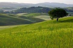 绿色托斯卡纳小山 免版税库存照片