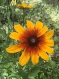 黄色捅类型花 库存图片