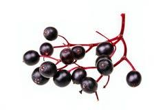 黑色接骨木浆果 库存图片