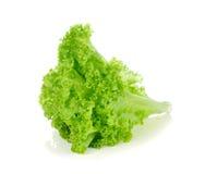 绿色散叶莴苣 免版税图库摄影