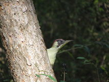绿色数据通信种类Kislovodsk公园 库存图片