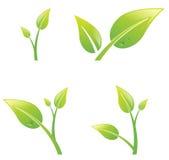 绿色新芽叶子集合 免版税库存照片
