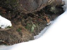 绿色新芽和冰 免版税库存照片