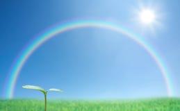绿色新芽和彩虹 库存图片