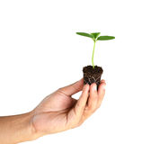 绿色新芽在白色背景隔绝的人手上 库存照片