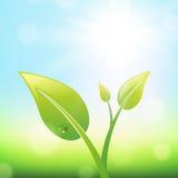 绿色新芽 免版税图库摄影