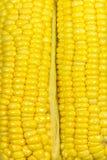 黄色新鲜玉米纹理 库存照片