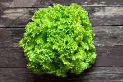 绿色新鲜的沙拉 库存照片