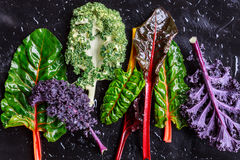 紫色无头甘蓝和瑞士牛皮菜 库存图片