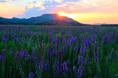 紫色早晨款待 免版税库存照片