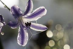 紫色早晨 免版税库存图片