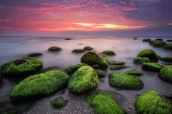 绿色早晨 免版税图库摄影