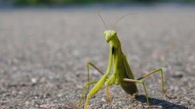绿色昆虫 库存照片