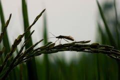 绿色昆虫 免版税库存图片