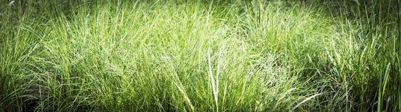 绿色明亮的夏天草 免版税图库摄影