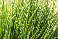 绿色明亮的草 库存照片