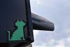 绿色映象点小猫 图库摄影