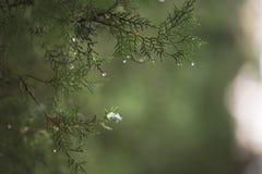 绿色春天分行 免版税库存照片