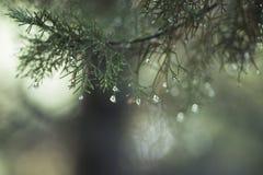 绿色春天分行 免版税图库摄影