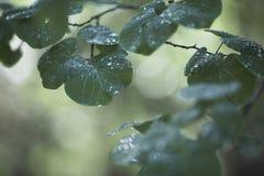 绿色春天分行 免版税库存图片