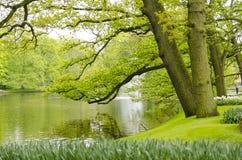 绿色春天庭院在Keukenhof,荷兰 库存照片