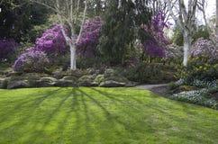 紫色春天庭院 库存照片