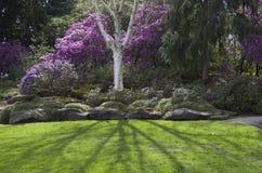 紫色春天庭院 免版税图库摄影