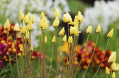 黄色春天背景 库存图片