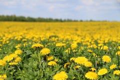 黄色春天领域 图库摄影