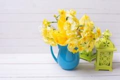 黄色春天黄水仙或水仙在蓝色的投手开花 图库摄影