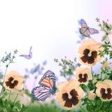 黄色春天紫罗兰 库存图片