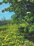 绿色春天 库存照片